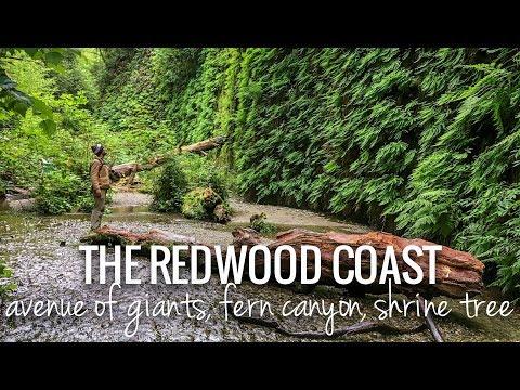 [RV Life & Travel] Ep. 97 Redwood Nat'l Park || Arcata, CA || Avenue Of Giants, Fern Canyon, Cider