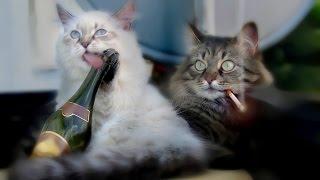 Симпатичные котята устроили бесилки!
