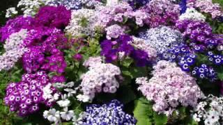 Romantic Soul Jazz [Leon Pressley - My Springtime Love (including the interlude)] | ♫ RE ♫