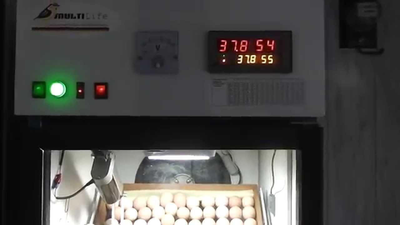 Доставка инкубаторов по городам украины за три дня. Возможна оплата при получении товара в. Куриный инкубатор на 70 яиц рябушка-2 с механическим переворотом. Инкубатор оснащен устройством механического переворота яиц и электромеханическим терморегулятором. Ламповый нагрев.