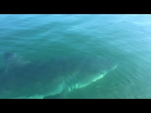Boy, father have close encounter with shark