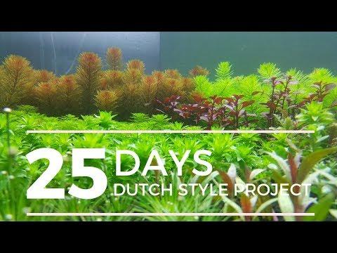 inspirasi-aquascape-design-gaya-dutch-style-,-tutorial-lengkap-step-by-step