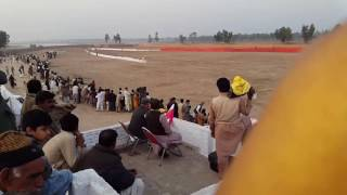 Coursing dog race 2016 82 nb sargodha
