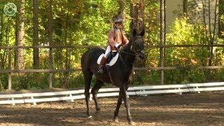 В Новосибирске прошёл Открытый кубок Новосибирской области по адаптивному конному спорту