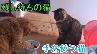 ぶさかわ猫