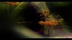 edIT - Ants (Music Video)