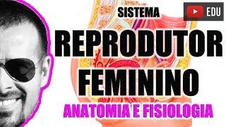 Sistema Reprodutor Feminino: Órgãos genitais femininos - Anatomia Humana - VideoAula 048