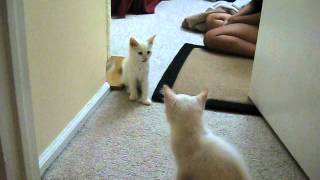 Kitten Siblings Reuniting