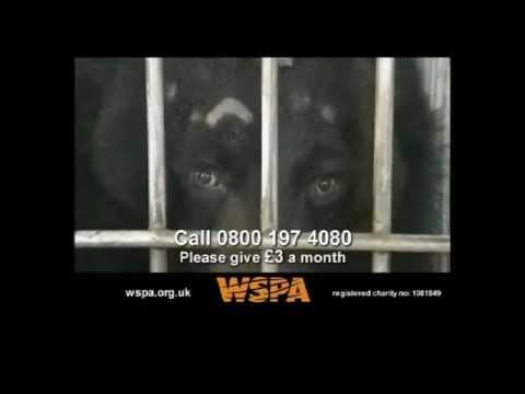 WSPA - Bears TV Advert