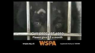 WSPA - Bears TV Advert