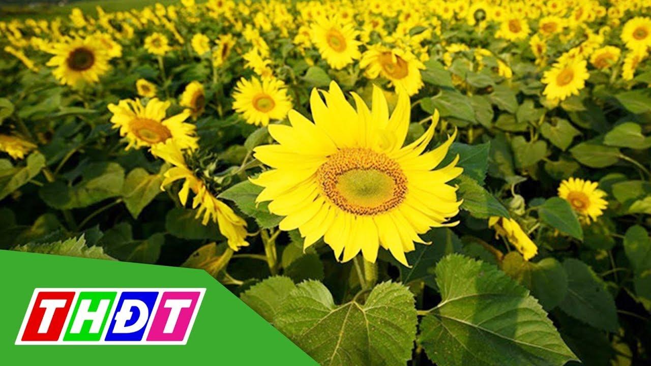 Mô hình du lịch cảnh nông đầu tiên ở huyện Than Uyên, Lai Châu | THDT