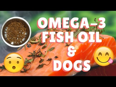 (Omega-3) Fish Oil And Dogs