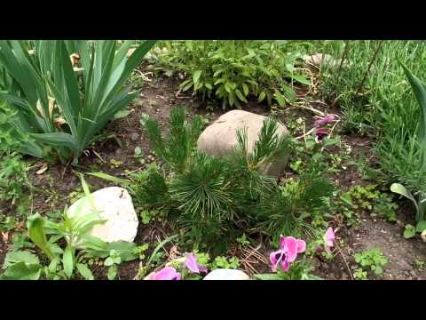 Обзор дачного участка в конце весны