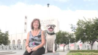 Invitation To Dog Man's Free Dog Training And Socialization Class At The L.a. Coliseum