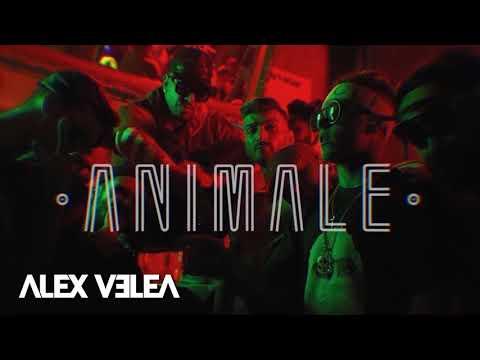 Alex Velea - Animale | Mp3 in Descriere