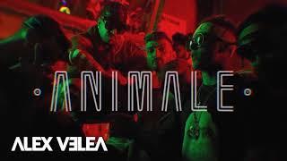 Alex Velea - Animale Mp3 in Descriere