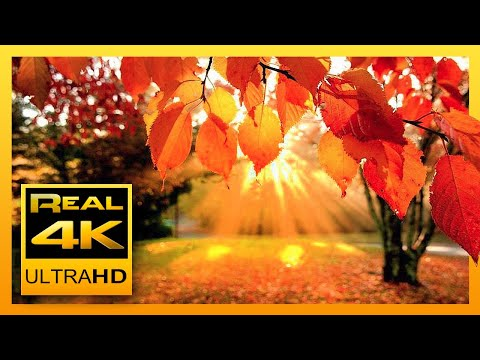 4K Autumn Forest & Relaxing Piano Music - Beautifull Fall Le