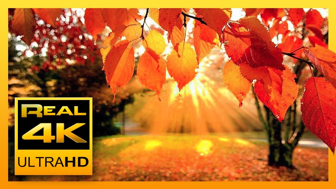 4k Autumn Forest Relaxing Piano Music Beautifull Fall Leaf Colors In 4k Uhd 2 Hours