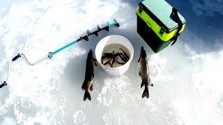 Попасть на рыбалку любой ценой Щука на жерлицы 01 апреля 2021