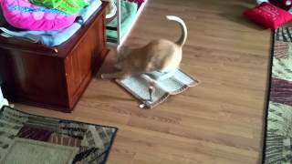 My cat and his new catnip lased scratch pad.
