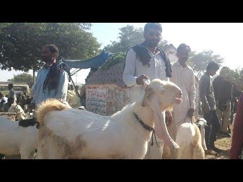 ||Sunday market || bakra mandi korangi 2 1/2 number karachi visit