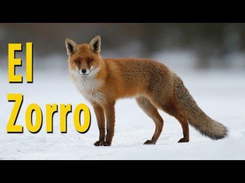 ¿Cómo hace el zorro? - Canción Educativa  #