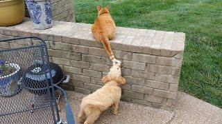 Puppy Biting Cat's Tail.