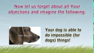 Therapy Dog Training Get  All The Secrets Of The Training Of Tret  You Will Be Able To Learn A Uniqu