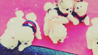 (tik tok video)Cute puppies you will definitely fall in love with them