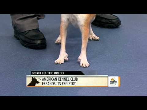 AKC Recognized New Dog Breeds
