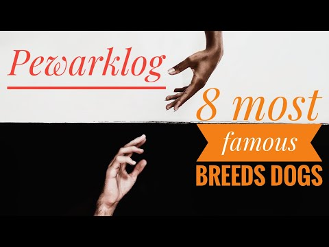 8 Most Famous Breeds dogs