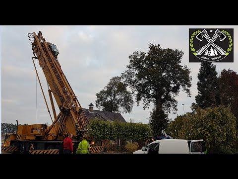 DutchTreeWork Boomverzorging &