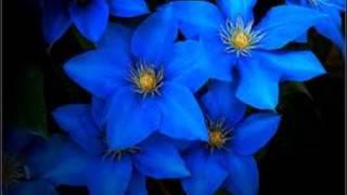 Fleur bleue - Simon Boudreau - Paroles