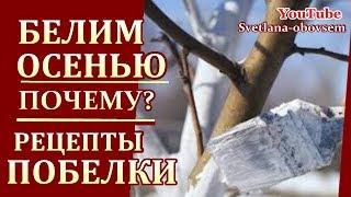 видео Обработка плодовых железным купоросом осенью
