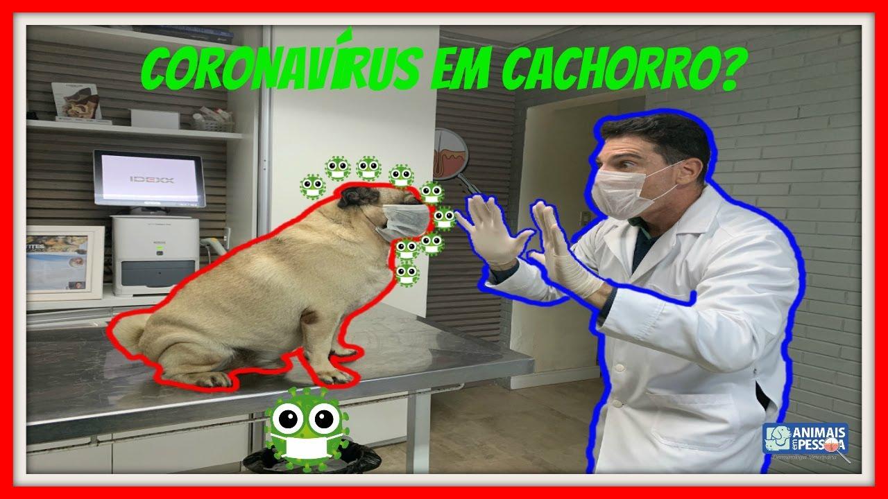 CORONAVIRUS EM CACHORRO - EXISTE CORONAVÍRUS EM CACHORRO - #COVID19