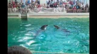 Танцы дельфинов (дельфинарий в Саратове)(, 2013-01-11T06:34:33.000Z)