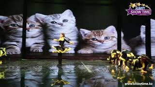 Томирис Томирис - Игривые котята | осенний