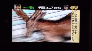 千原ジュニア オモクリ監督「愛」