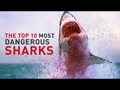 SHARK! The Most Dangerous and Deadly Sharks in the World