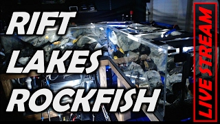 Live Rift Lake Multiview Aquarium - DAY 155