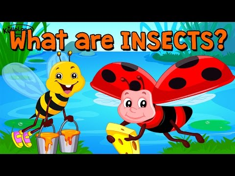 Learn About Insects | Song & Activity | Preschool | Kids | Kindergarten