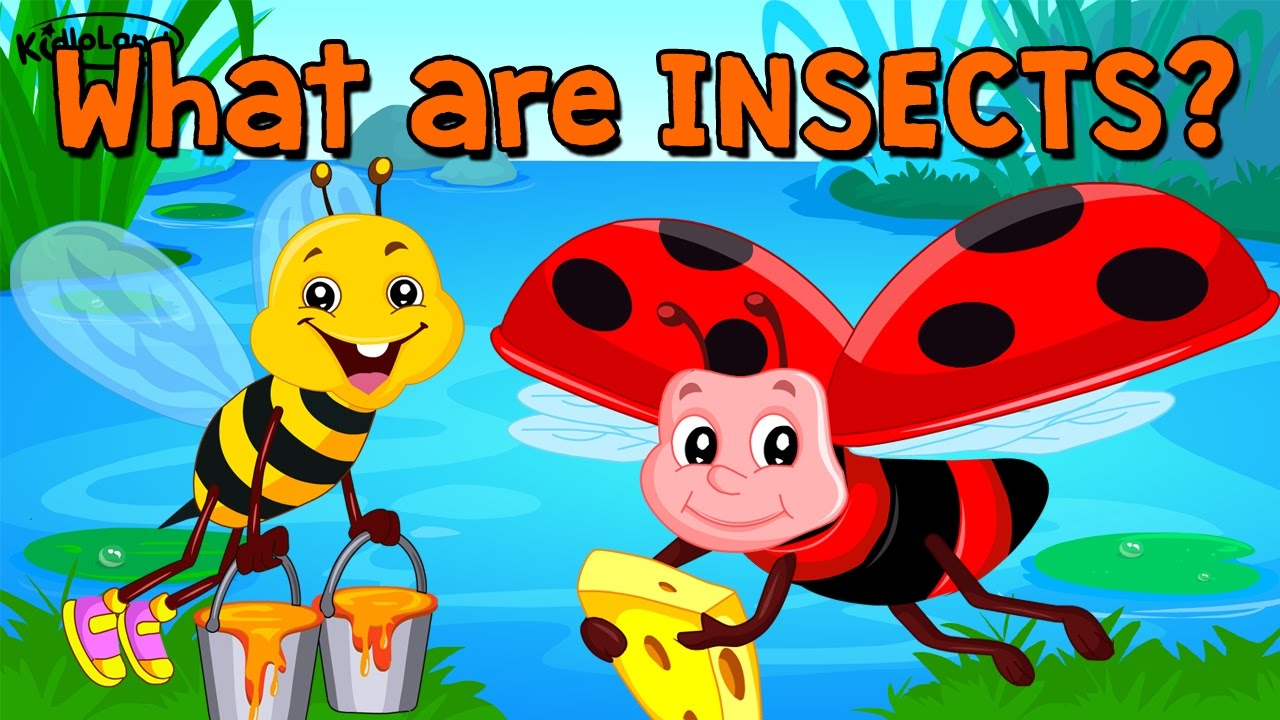 songs about insects for preschoolers learn about insects song amp activity preschool 991