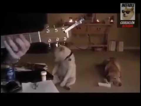 Rock n Roll Dog