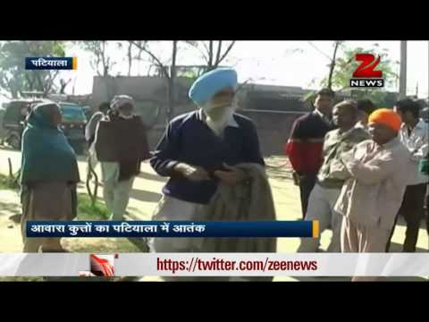 Dogs kills child in Patiala