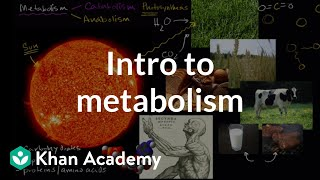 Introduction To  Metabolism: Anabolism And Catabolism