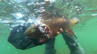 Fly Fishing for Monster Cutthroat Trout