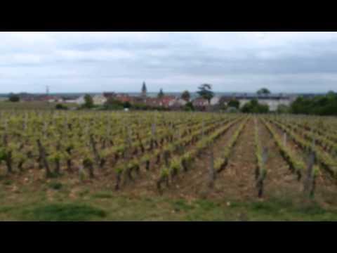 ロマネ・コンティの畑|ブルゴーニュのヴォーヌ・ロマネ村にある世界一有名な畑|Romanée-conti