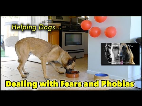 Helping Dogs Deal with Fear and Phobias - Dog Training & Behavior