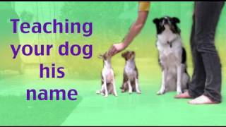 How To Teach Your Dog His Name- Dog Training