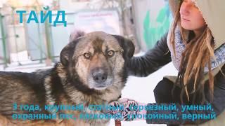 Екатеринбург! Возьми собаку из приюта   спаси ЖИЗНЬ!!!